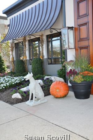 The White Dog relaxes at the entrance to the White Dog Cafe!